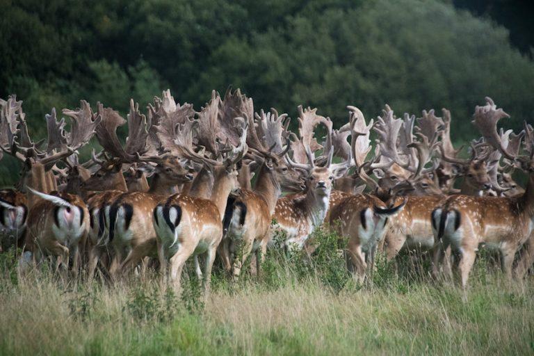 Knepp Wildland Safaris