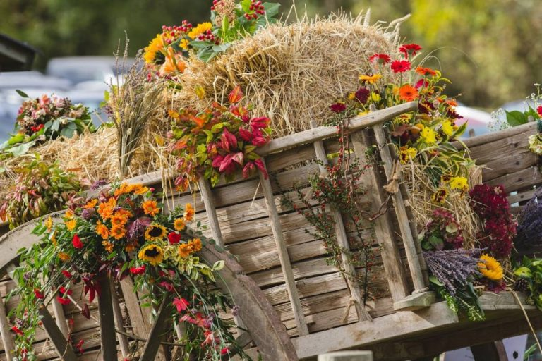 Autumn & Countryside Show at Weald & Downland Museum