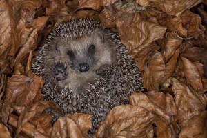 Half Term 'Hibernation' Drop In Day at Michelham Priory
