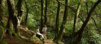 Hollybush Wood Walk