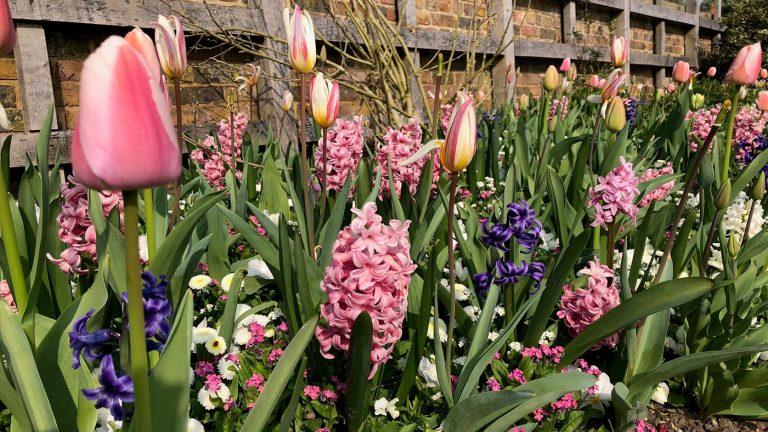 Spring Spectacular at Standen House & Garden