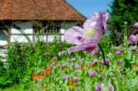 Wildflowers at Weald & Downland Museum