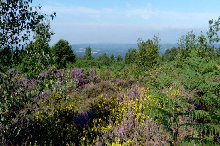 Woolbeding Countryside