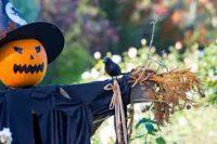 Spellbinding Halloween Trail at Borde Hill Garden