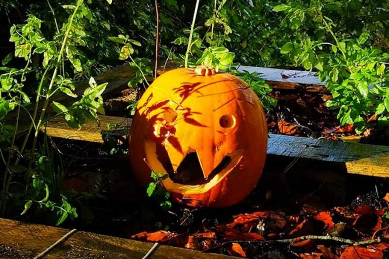 Halloween Half Term Activities at Weald and Downland Museum