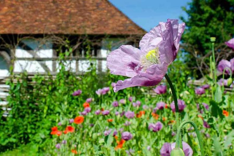 May Day Weekend at Weald and Downland Museum