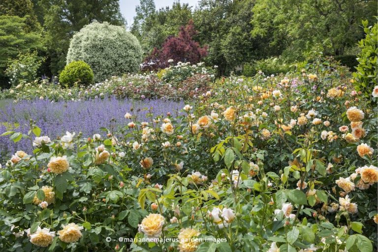 Rose Celebration at Borde Hill Garden